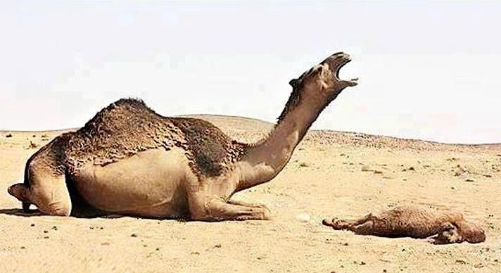 صورة صور حيوانات حزينة , الحزن في الحيوانات