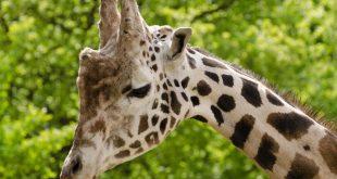 بالصور صور حيوانات حزينة , الحزن في الحيوانات 1492 310x165