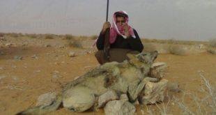 صورة صيد الحيوانات البريه , صيد حيوان بري