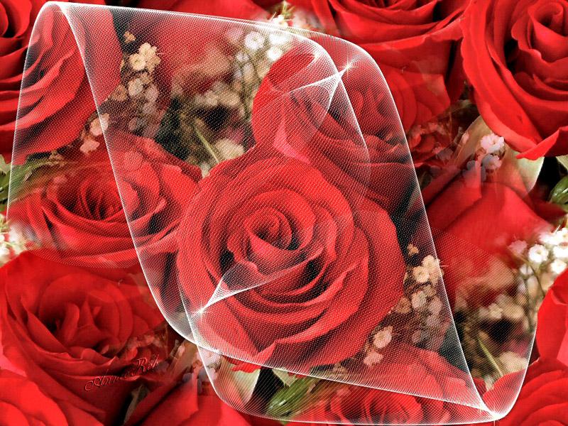 صور صور ورود خياليه , اجمل صور الورود