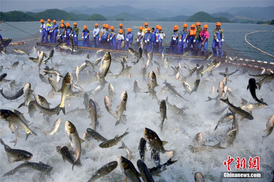 بالصور صور صيد الاسماك , صوره صيد سمك 6591 13