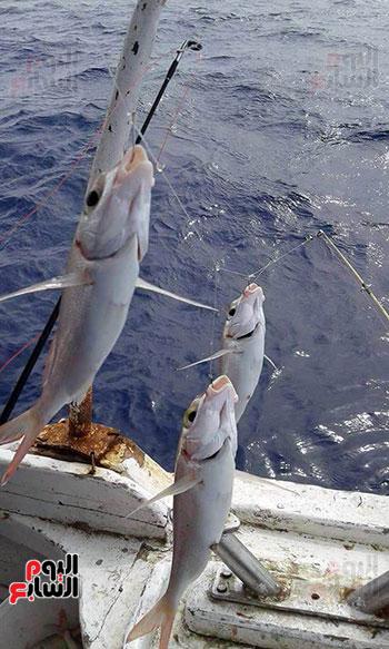 بالصور صور صيد الاسماك , صوره صيد سمك 6591 17