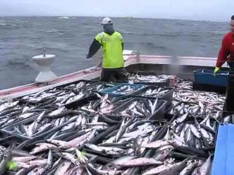 بالصور صور صيد الاسماك , صوره صيد سمك 6591 19