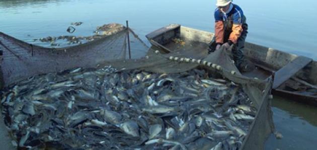 بالصور صور صيد الاسماك , صوره صيد سمك 6591 20