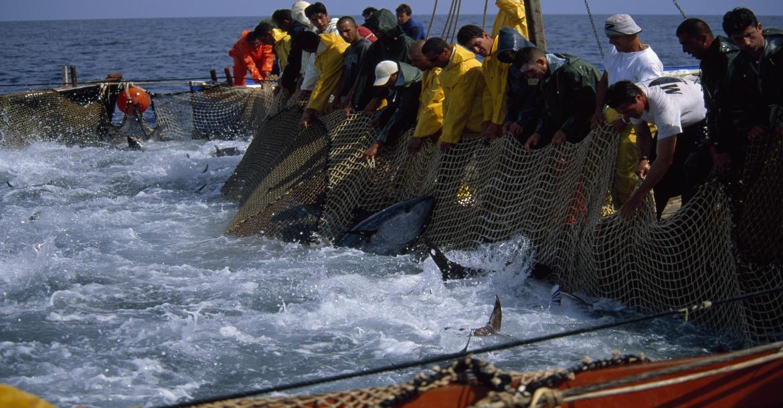 بالصور صور صيد الاسماك , صوره صيد سمك 6591 3