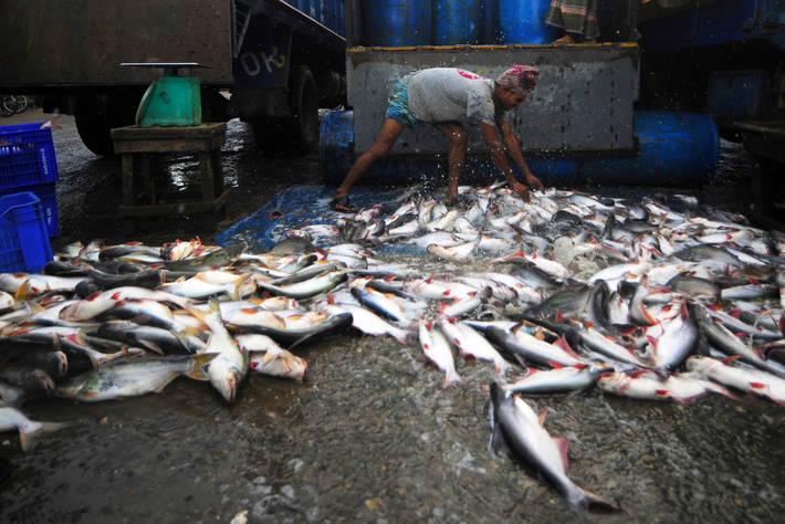 بالصور صور صيد الاسماك , صوره صيد سمك 6591 4
