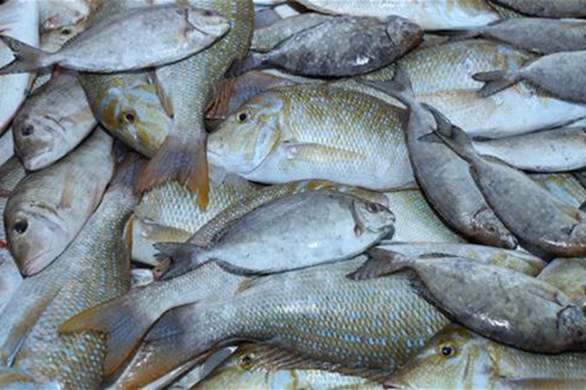 بالصور صور صيد الاسماك , صوره صيد سمك 6591 6