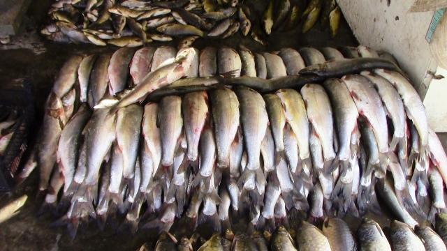 بالصور صور صيد الاسماك , صوره صيد سمك 6591 7