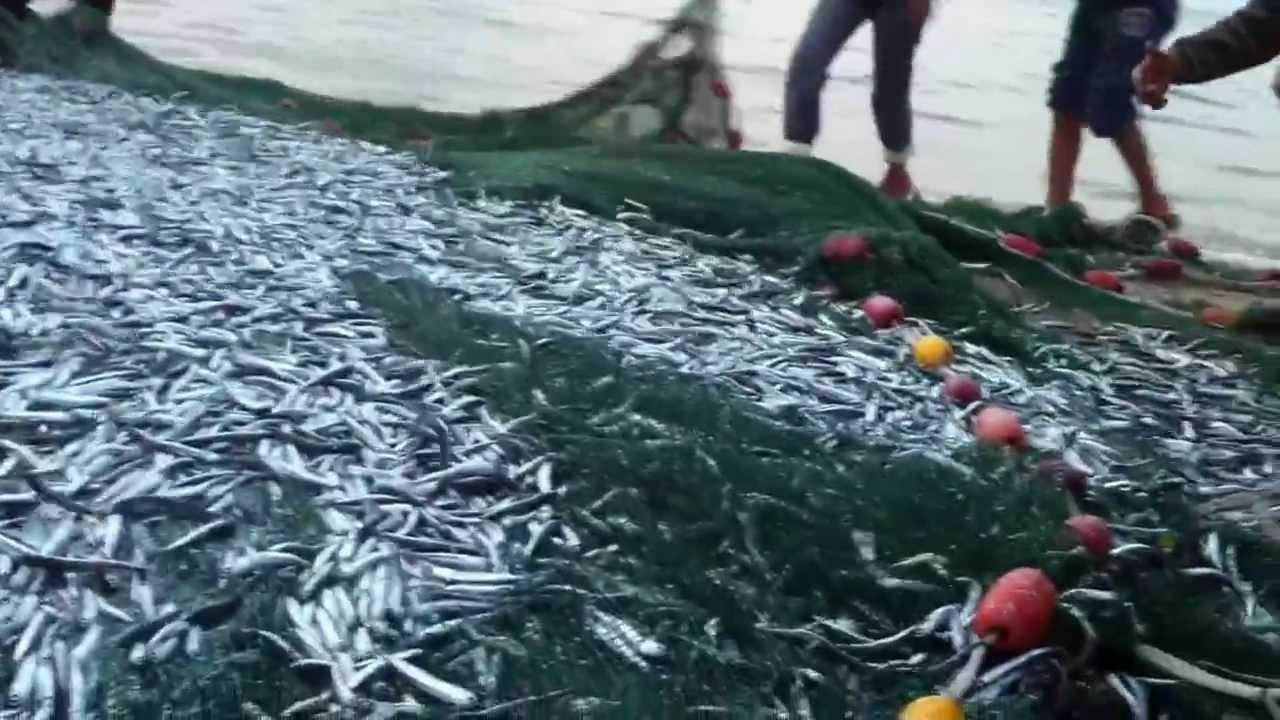 بالصور صور صيد الاسماك , صوره صيد سمك 6591 9