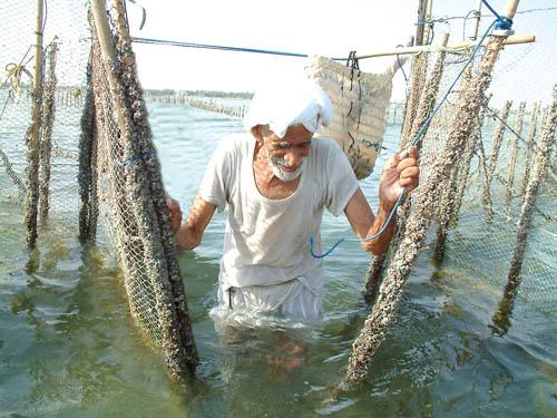 بالصور صور صيد الاسماك , صوره صيد سمك 6591