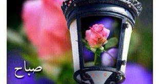 صورة صباح الورد والجوري , الصباح علي منظر الورد الرائع
