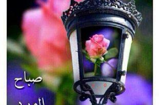 صور صباح الورد والجوري , الصباح علي منظر الورد الرائع