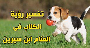 صور رؤية كلب في المنام , تفسير رؤيه الكلب فى منام الحالم