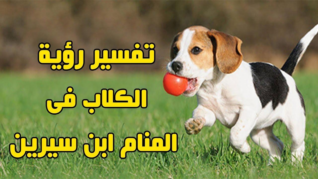 صورة رؤية كلب في المنام , تفسير رؤيه الكلب فى منام الحالم