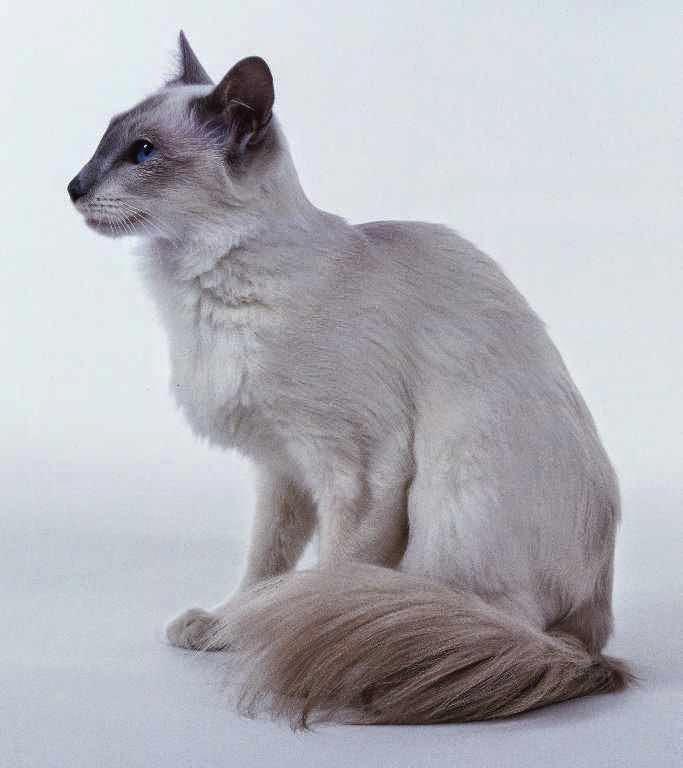 صور جميع انواع القطط , معلومات غريبه وجديده عن القطط