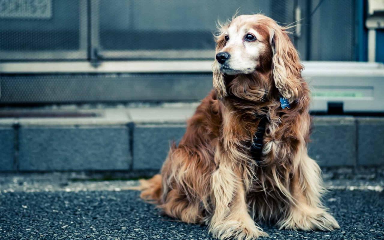صورة ضرب الكلب في المنام , ضرب الحيوانات فى المنام وما التفسير