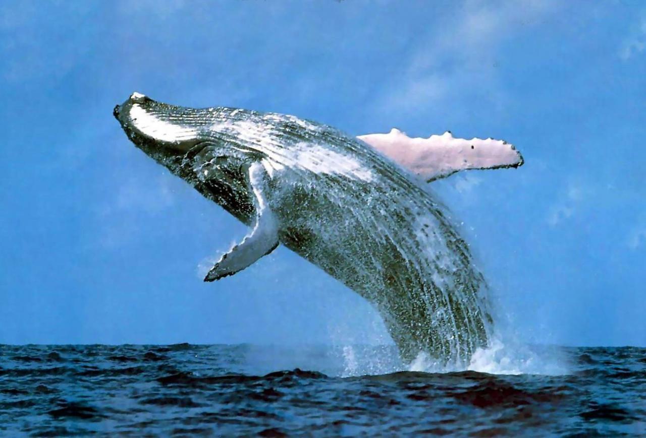 صورة اكبر حيوان بالعالم , اضخم واكبر حيوان موجود على وجه الارض