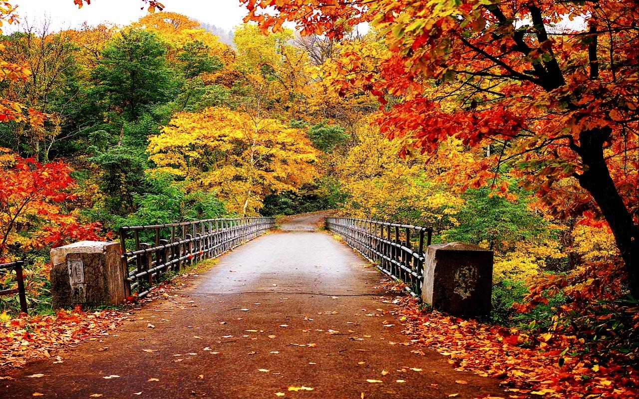 بالصور موضوع عن الخريف , اجمل واصعب فصول السنه ونفحات للخريف 1465 1