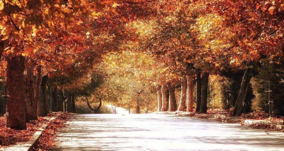 بالصور موضوع عن الخريف , اجمل واصعب فصول السنه ونفحات للخريف 1465 2