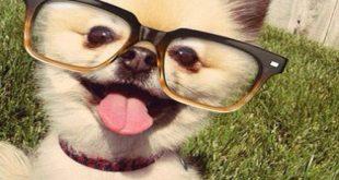 صورة صور مضحكة للحيوانات , اجمل الحيوانات