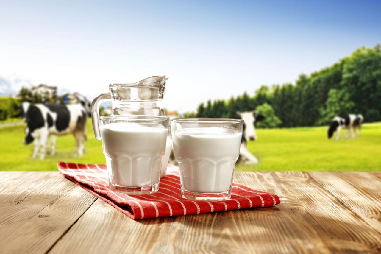 صور الفرق بين اللبن والحليب , اللبن مش هو الحليب اعرف الفرق