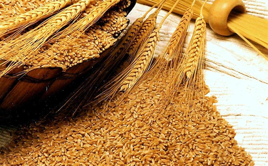 صور معلومات عن القمح , فوائد حبوب القمح والمواد الغني بها