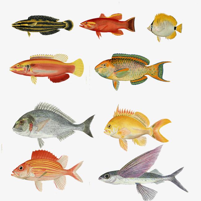 صور هل تعلم عن الاسماك , معلومات عن الاسماك