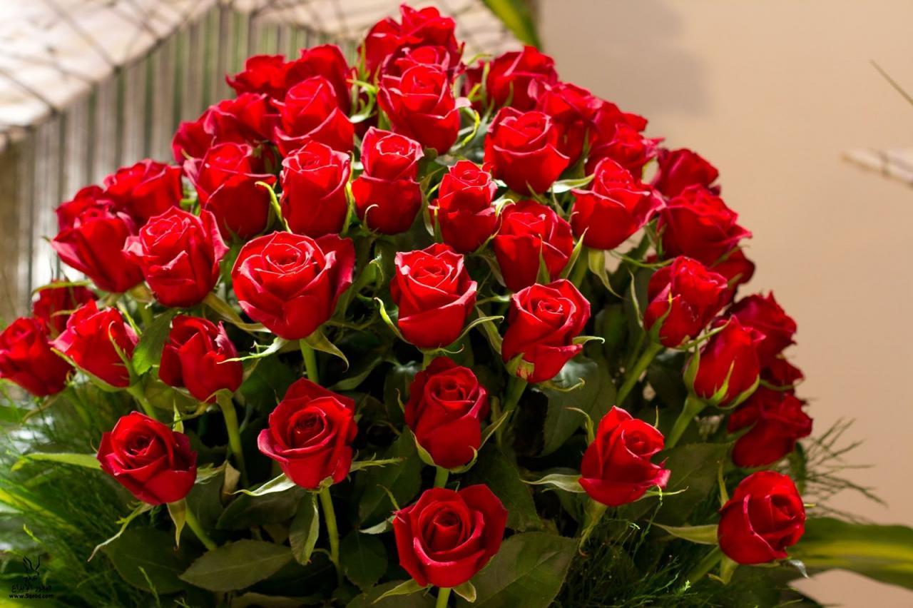 صور صور ورود وزهور , اجمل صور الورود