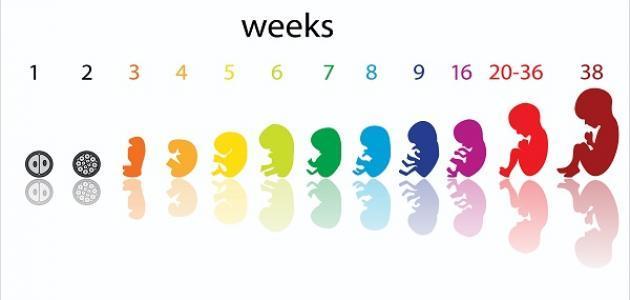 صورة الحمل بالاسبوع الاول , اعراض الحمل