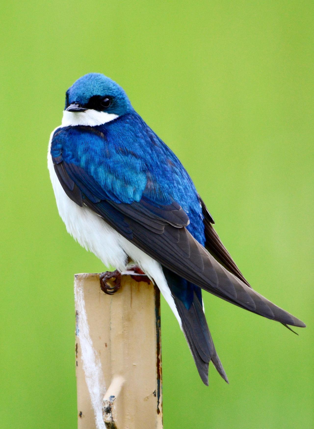 صورة من الطيور من 5 حروف , اجمل الطيور