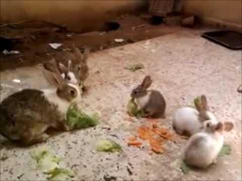 بالصور حيوانات اكلة الاعشاب , اروع واجمل الحيوانات الرقيقة 102 1