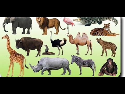 بالصور حيوانات اكلة الاعشاب , اروع واجمل الحيوانات الرقيقة 102 10
