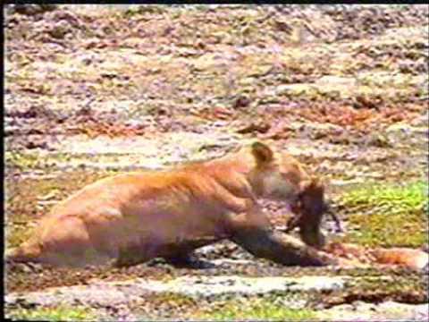 بالصور حيوانات اكلة الاعشاب , اروع واجمل الحيوانات الرقيقة 102 2