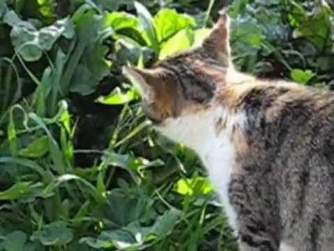 بالصور حيوانات اكلة الاعشاب , اروع واجمل الحيوانات الرقيقة 102 6