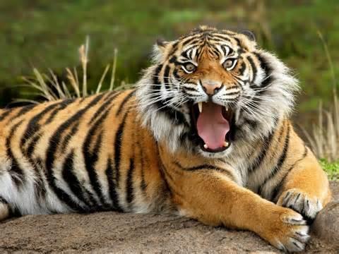 بالصور حيوانات اكلة الاعشاب , اروع واجمل الحيوانات الرقيقة 102 7
