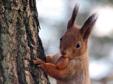 بالصور حيوانات اكلة الاعشاب , اروع واجمل الحيوانات الرقيقة 102 8