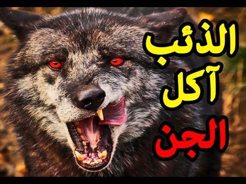بالصور هل الذئب ياكل الجن , خوف الجن من الذئاب 111 1
