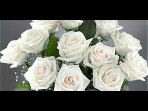 صور معنى الوردة البيضاء , اروع المعانى الرقيقة ومفهوم الوردة البيضاء