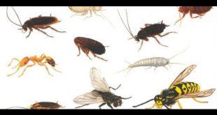 بالصور حشرات صغيرة جدا في المنزل , علاج الحشرات التى توجد فى البيت 178 2 310x165