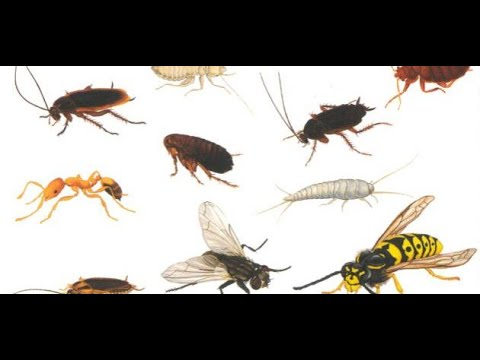 صور حشرات صغيرة جدا في المنزل , علاج الحشرات التى توجد فى البيت