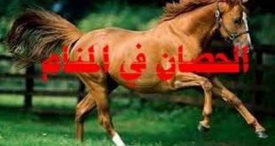 بالصور معنى الحصان في المنام , تاويل رؤية الحصان فى الحلم 2237 3 310x165