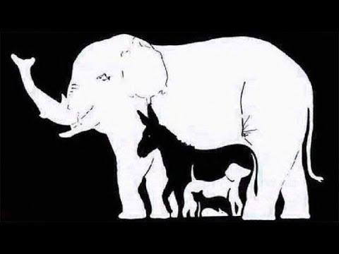 بالصور كم حيوان في الصورة , ابسط الالغاز البسيطة 344 2