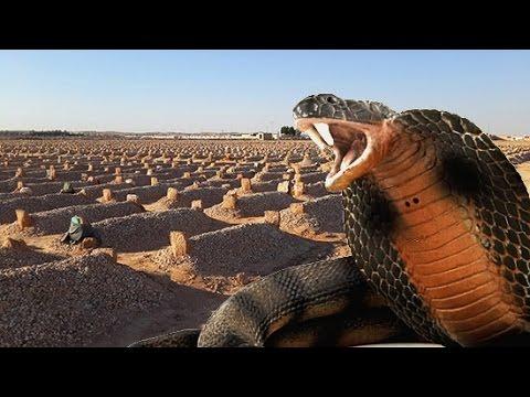 صور حلم الثعبان في المنام , تفسير الاحلام وما تدل عليها