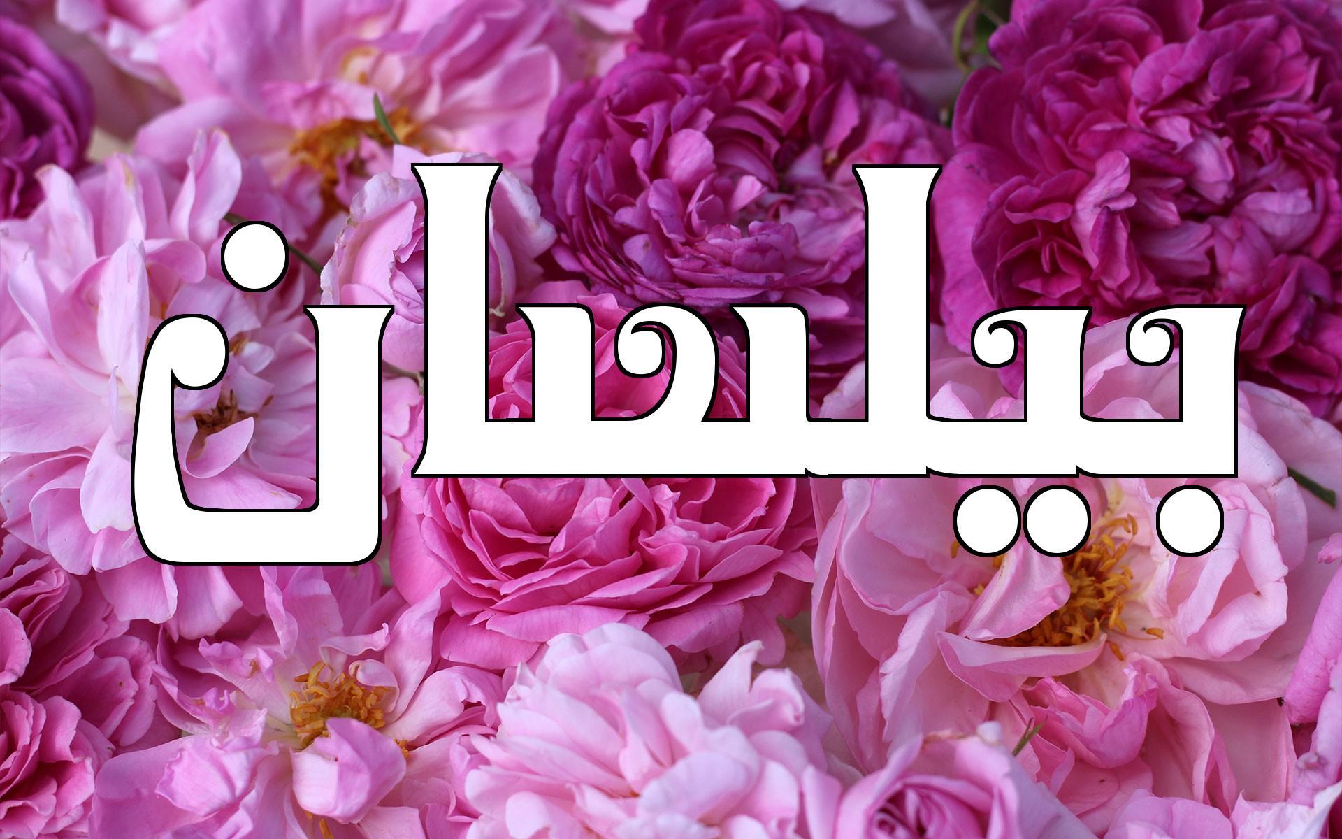 بالصور معنى اسم بيلسان , اصل اسم بيلسان في التسميه unnamed file 264