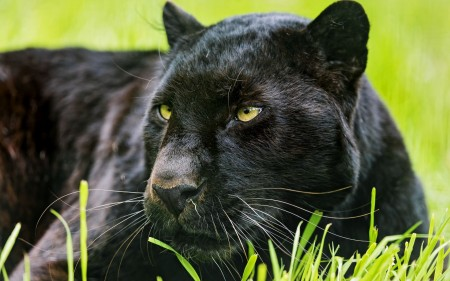 صور صور حيوانات جديدة , احدث الصور لمخلوقات الله