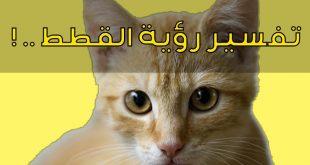 صور رؤية القطط الصغيرة في المنام , قطه صغيره وتفسيرها فى المنام