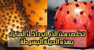 صور كيف تتخلص من الذباب , القضاء على الذباب بمكون امن