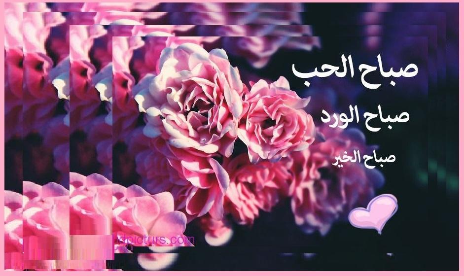 صور رسائل حب صباح الورد , احلى صباح مع اجمل ورد