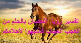 صور تفسير الحصان في المنام , رؤيا الحصان في المنام