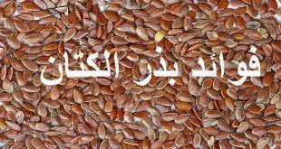 صورة رجيم بذور الكتان , بذور الكتان للتخسيس